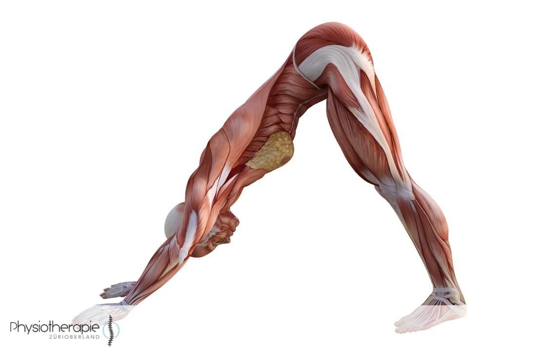 Physiotherapie ZüriOberland AG Hatha Yoga